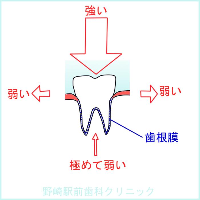 歯の力の負担方向