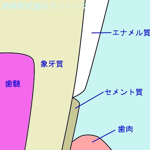 歯頚部付近の硬組織