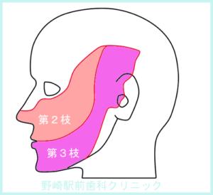三叉神経の支配領域